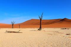 Deserto della Namibia Immagine Stock