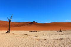 Deserto della Namibia Fotografie Stock Libere da Diritti