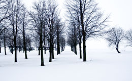 Deserto della neve con gli alberi, la solitudine e la tristezza Immagini Stock