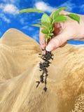 Deserto della pianta Immagine Stock Libera da Diritti