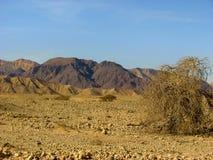 Deserto di Arava Fotografie Stock Libere da Diritti