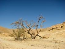 Deserto di Arava Immagine Stock