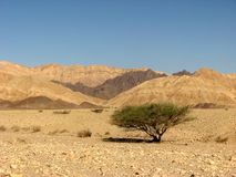 Deserto di Arava Fotografia Stock Libera da Diritti