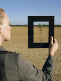 Deserto di Framing Tree In della donna di affari Immagine Stock Libera da Diritti