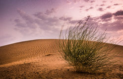 Deserto di Jaisalmer Fotografia Stock