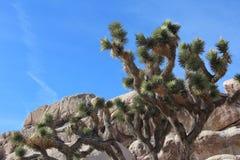 Deserto di Joshua Tree National Park California Immagini Stock