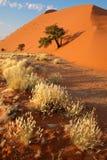 Deserto di Judean Immagine Stock