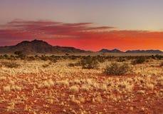 Deserto di Kalahari Fotografie Stock Libere da Diritti