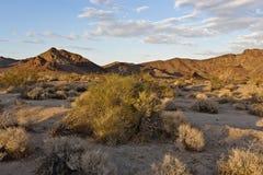 Deserto di Mojave fotografia stock