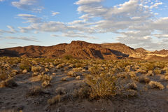 Deserto di Mojave immagini stock libere da diritti