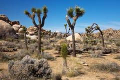 Deserto di Mojave stupefacente Immagine Stock Libera da Diritti