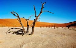 Deserto di Namib immagini stock libere da diritti