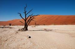 Deserto di Namib Fotografia Stock Libera da Diritti