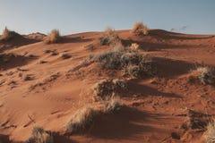Deserto di Namib Immagine Stock Libera da Diritti