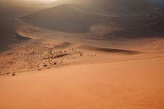 Deserto di Namib Fotografie Stock Libere da Diritti