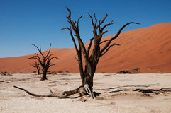 Deserto di Namib Fotografie Stock