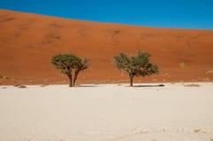 Deserto di Namib Immagine Stock
