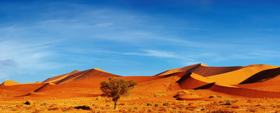 Deserto di Namib, Sossusvlei, Namibia Immagine Stock Libera da Diritti