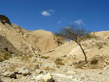 Deserto di Negev Fotografia Stock