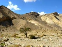 Deserto di Negev Fotografie Stock Libere da Diritti