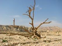 Deserto di Negev. Fotografie Stock