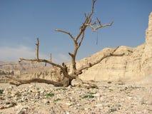 Deserto di Negev. Fotografia Stock Libera da Diritti