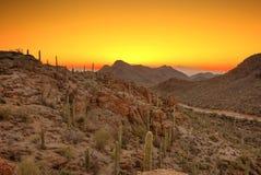 Deserto di Sonoran prima dell'alba Fotografia Stock