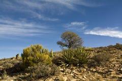 Deserto do Arizona Imagens de Stock