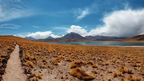 Deserto do Chile Atacama fotos de stock royalty free