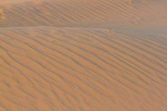 Deserto do ouro no por do sol Textura da areia Fotos de Stock Royalty Free