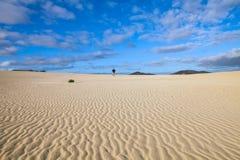 Deserto e dune immagine stock