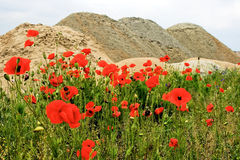 Deserto e fiori 7 Fotografia Stock