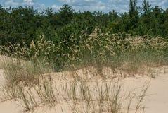 Deserto e foresta nella distanza Fotografia Stock
