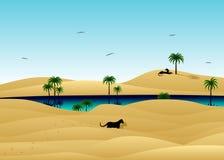 Deserto e gatos selvagens Fotos de Stock Royalty Free