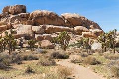 Deserto e Joshua Tree de Mojave Fotografia de Stock