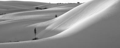 Deserto e yucca bianchi delle sabbie Fotografia Stock Libera da Diritti