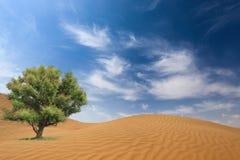 Deserto ed albero Fotografia Stock Libera da Diritti