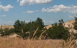 Deserto fra i campi Immagine Stock