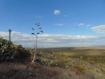 Deserto messicano Immagine Stock Libera da Diritti