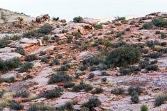 Deserto na área vermelha da conservação da garganta da rocha Foto de Stock Royalty Free