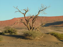 Deserto Namíbia Imagens de Stock Royalty Free