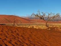 Deserto Namíbia Fotos de Stock Royalty Free