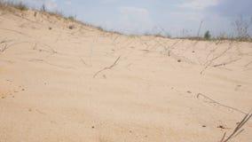 Deserto no dia ensolarado video estoque