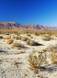 Deserto nordamericano immagini stock