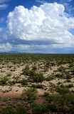 Deserto o Arizona do Sonora foto de stock royalty free