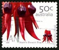 Deserto Pea Flower Australian Postage Stamp de Sturts fotografia de stock royalty free