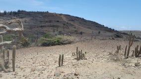 Deserto piacevole Fotografie Stock Libere da Diritti