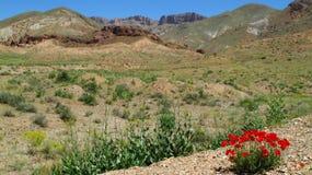 Deserto piacevole Immagini Stock Libere da Diritti