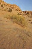 Deserto rochoso com arbustos selvagens Imagem de Stock