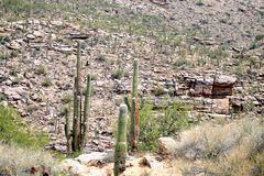 Deserto Rocky Terrain di Sonoran Fotografia Stock